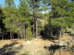 Starlight-Pines-Ranchettes