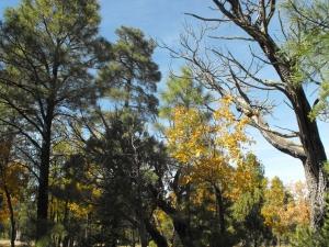 Blue Ridge Estates - Happy Jack Arizona